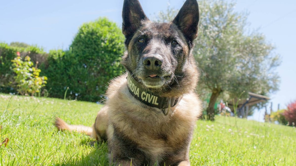 Elton, el mejor perro policia se retira