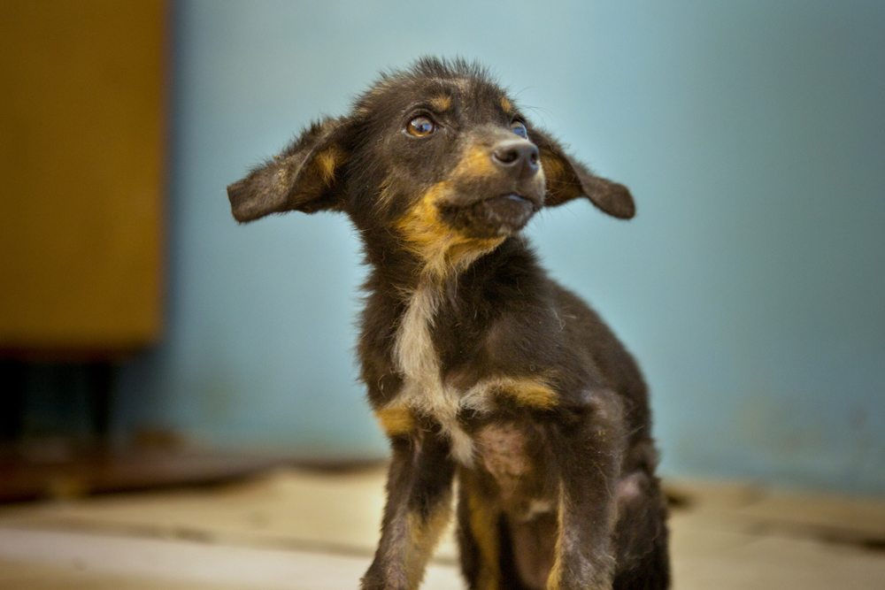 Imagen de Cachorro sin tratar en Chernobil