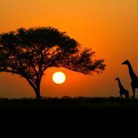 Africa con perro