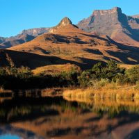 Sudafrica con perro